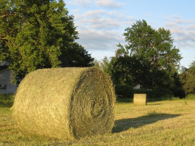 Round bales of hay  in Knowlton.