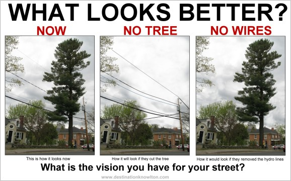 Let's look at the possibilities beyond just the fact that trees are the lungs of our planet!