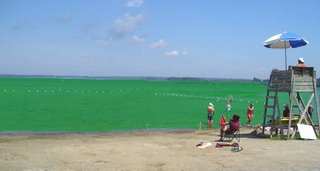 Will Brome Lake become something that looks like a science fiction movie?