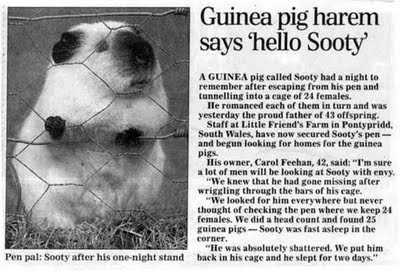 Guinea Pig...nothing to do with Brome Lake but neither does the Mayor of another Town!