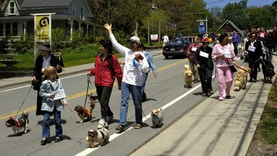 The pooches on parade!