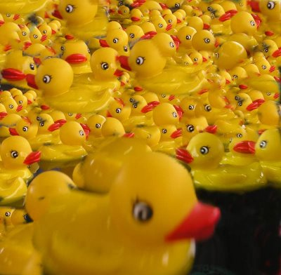 More ducks than you can shake a stick at!