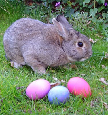 No More Easter Bunny Visits For Us! Can you blame The Easter Bunny?