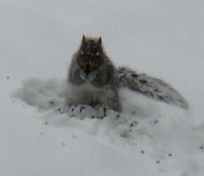 Valentines Day is for all creatures great and small...even those pesky squirrels!
